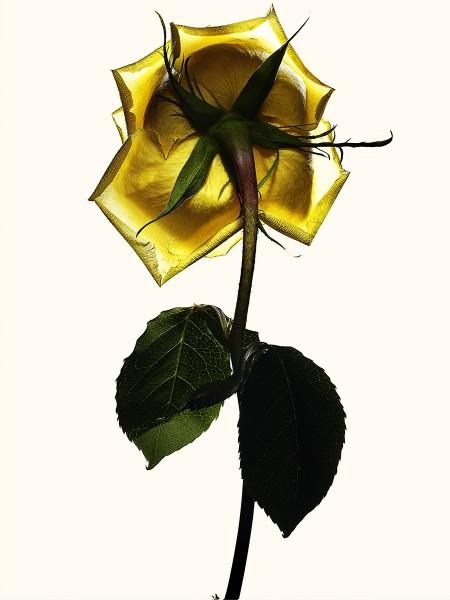 flower encyclopedia